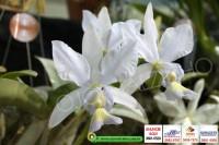 exposicao-orquideas 003