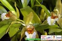 exposicao-orquideas 004