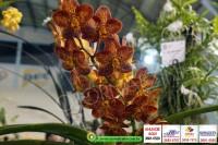 exposicao-orquideas 005