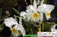 exposicao-orquideas 007