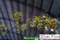 exposicao-orquideas 008