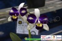 exposicao-orquideas 011