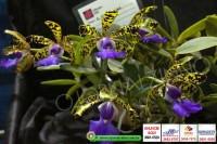 exposicao-orquideas 012
