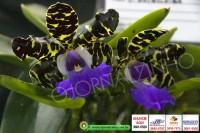 exposicao-orquideas 013