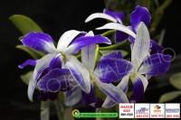 exposicao-orquideas 014