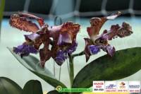 exposicao-orquideas 016