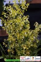 exposicao-orquideas 017