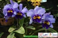 exposicao-orquideas 021