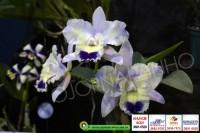 exposicao-orquideas 022