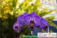 exposicao-orquideas 024