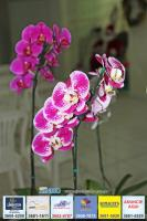 exposicao-orquideas 018