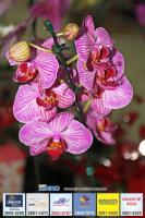 exposicao-orquideas 019