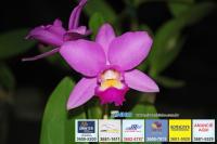 exposicao-orquideas 020