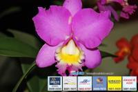 exposicao-orquideas 023