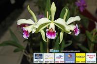 exposicao-orquideas 025